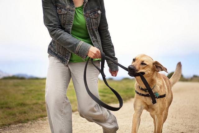 girl walking dog use on theo used on fb wife.jpg