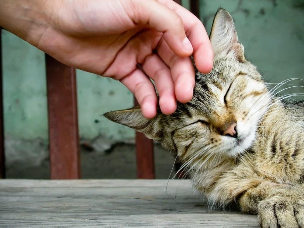 2012 impact hand with cat.jpg