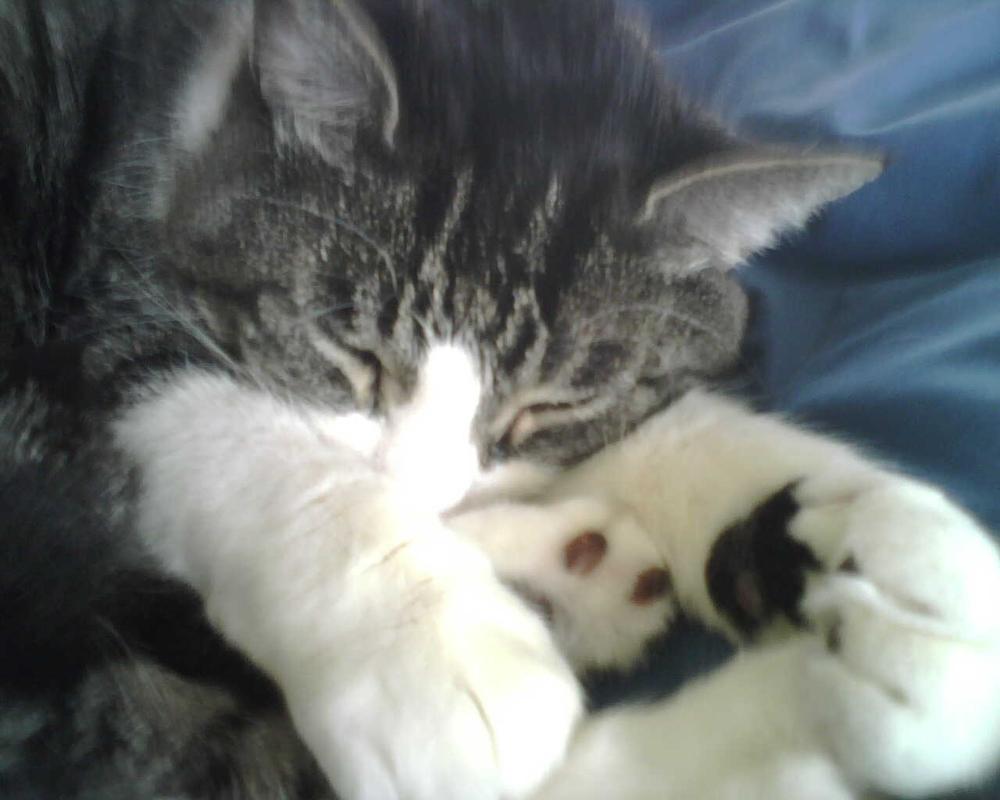 Theo sleeping.JPG