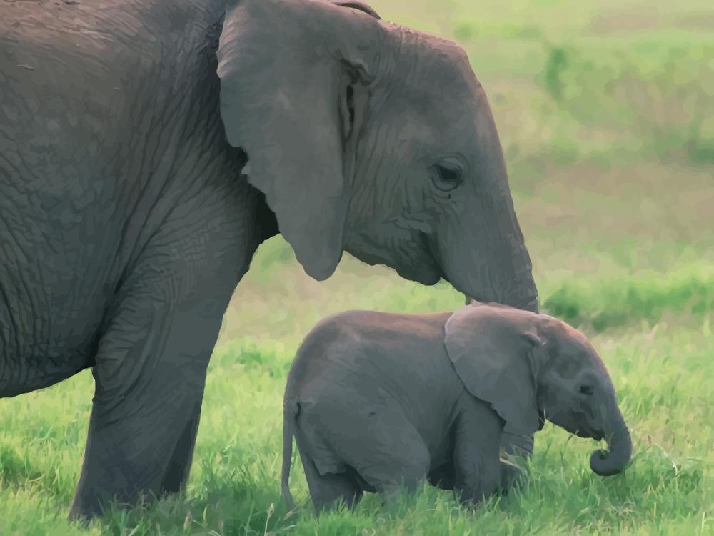 FreeVector-Baby-Elephant.jpg