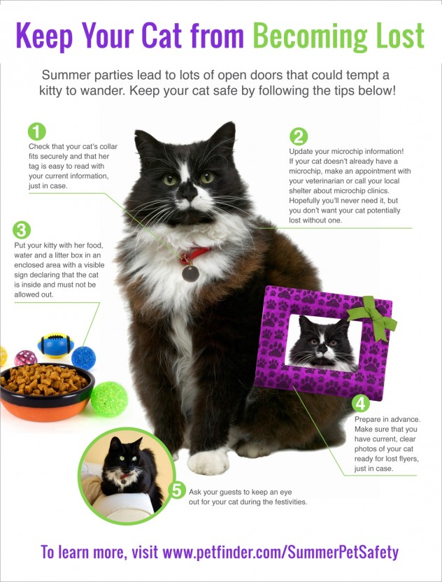 5-tips-to-keep-cat-from-becoming-lost-632x832.jpg