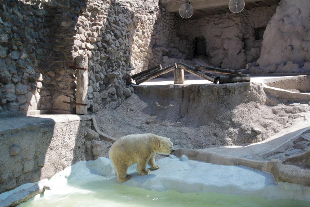argentine zoo.jpg
