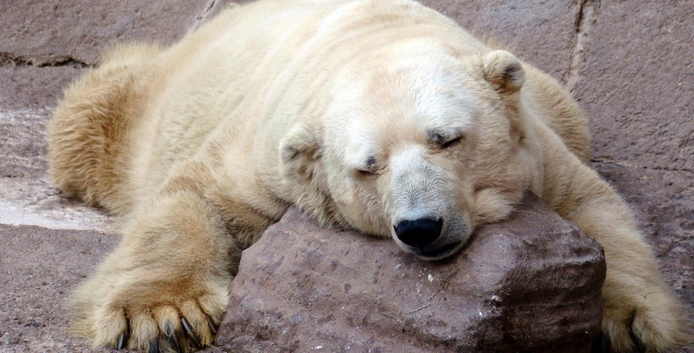 arturo_polar_bear_depression large.jpg