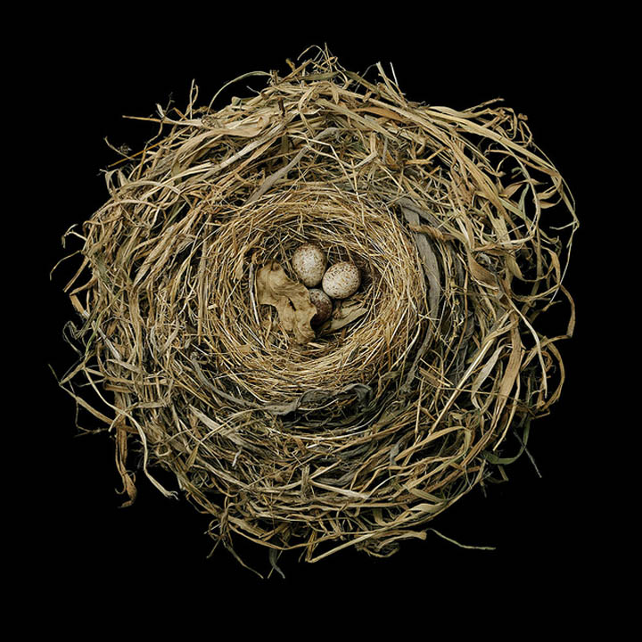 bird-nests-sharon-beals-04.jpg