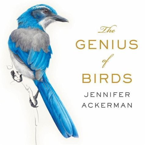 genius of birds jen ackerman square one.jpg
