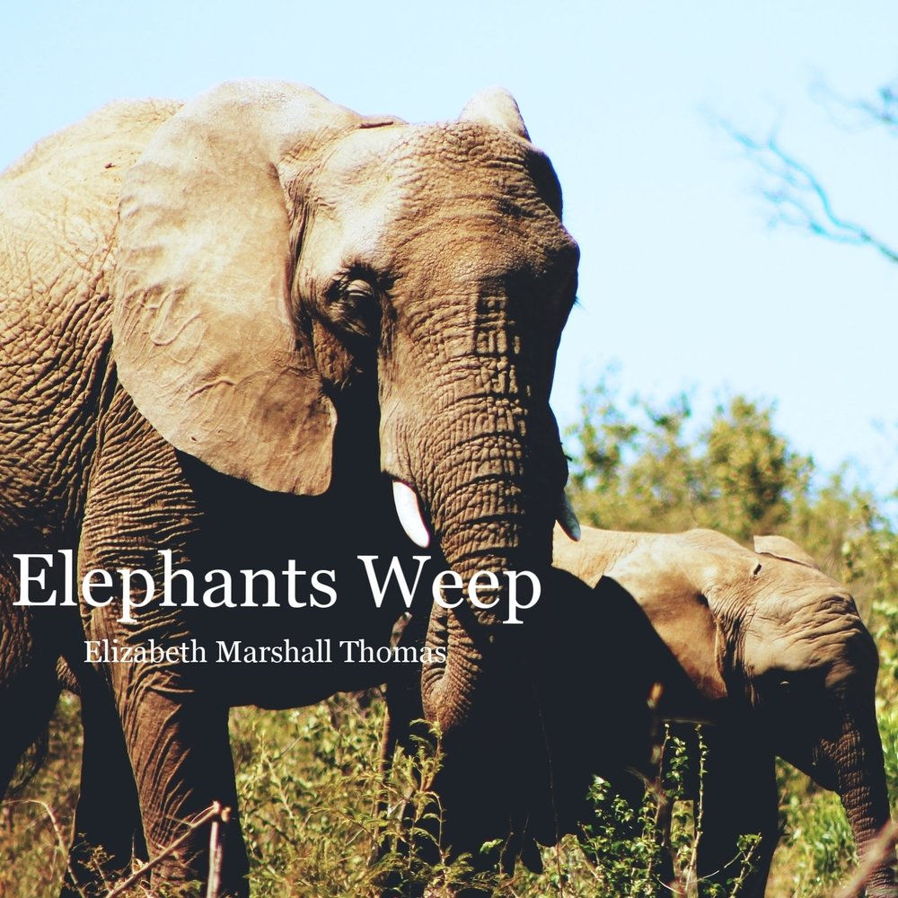 christy zinn African Elephant Up cW.jpg