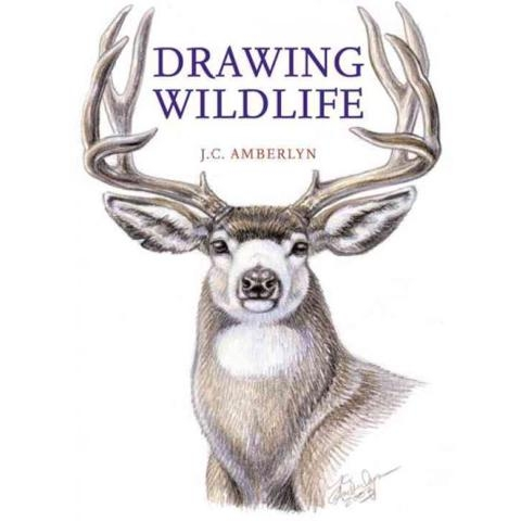 drawing wildlife jc amberlyn book.jpg