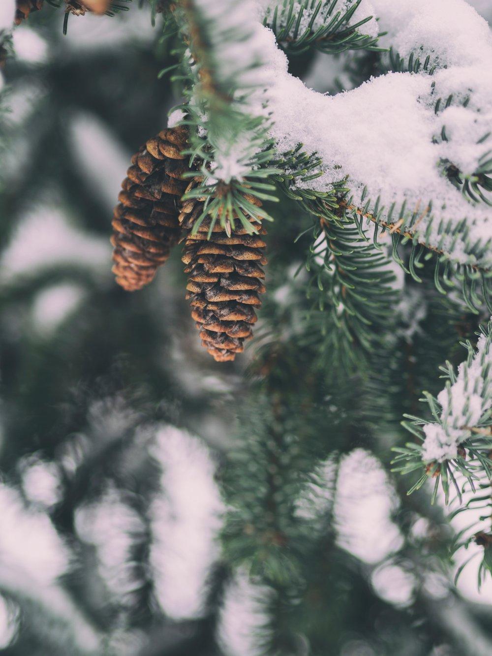 Aaron Burden snow on pie tree Up