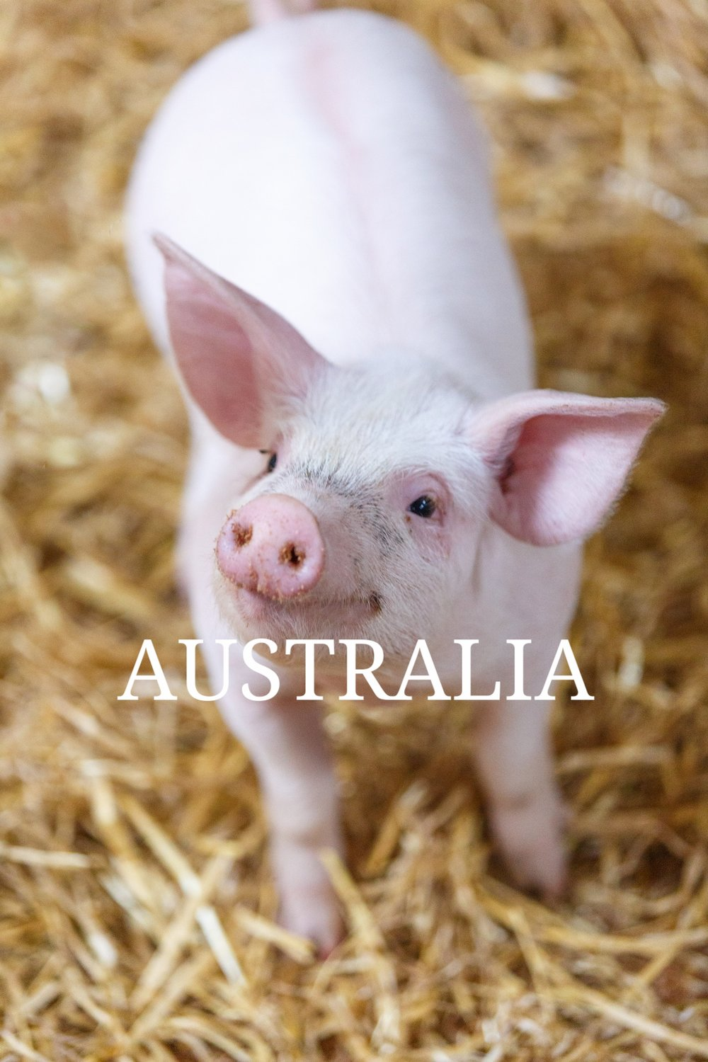 animals Australia vimeo