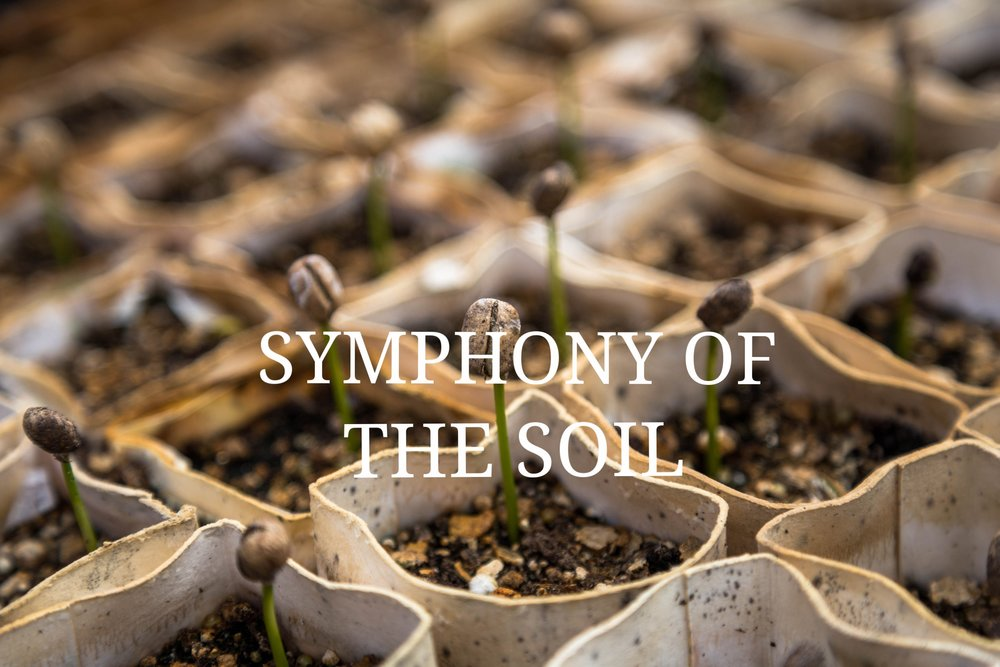 symphony of the soil  @ vimeo