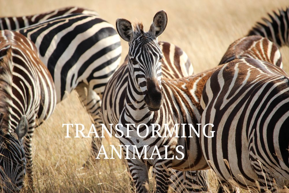 transforming animals  @ Vimeo
