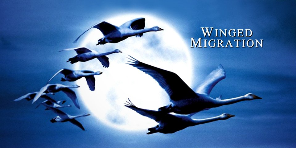 winged migration  poster wide.jpg