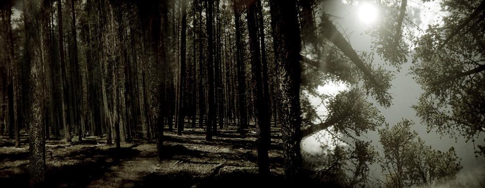 holbufftrees#2.jpg