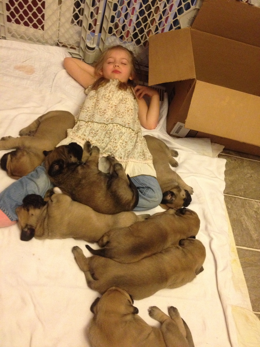 Leah asleep with clara pups.JPG