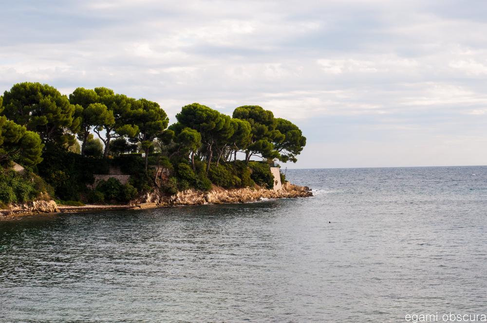 Coastal foliage