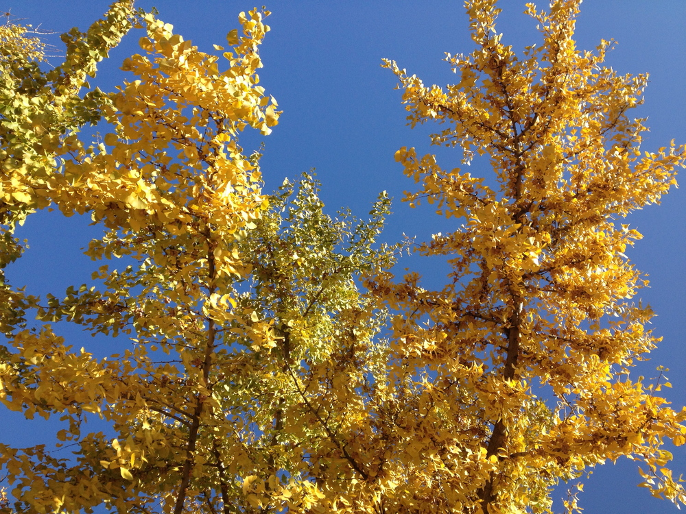Omaha Yellow, October 29 2012