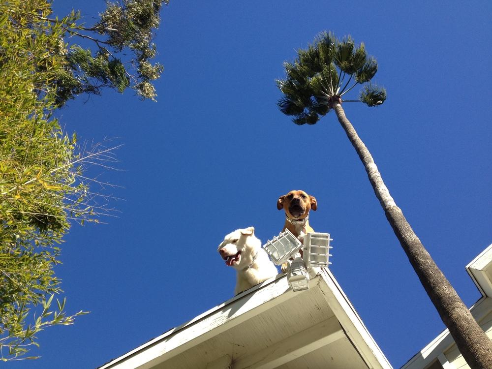 LA Dogs Roof Sky.jpg