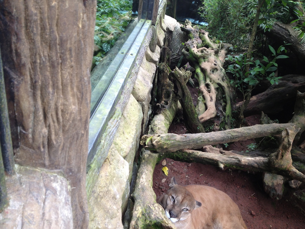 Luci Butler with Cougar at La Paz Waterfall Gardens Costa Rica