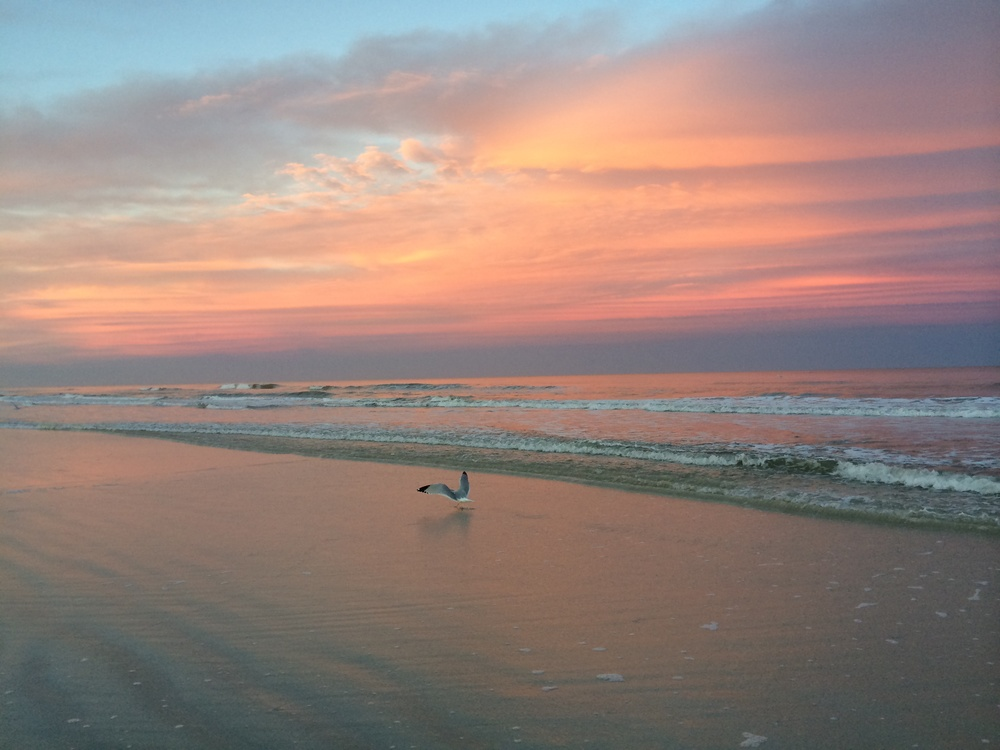 Sunset Seagull, St. Augustine, 2014