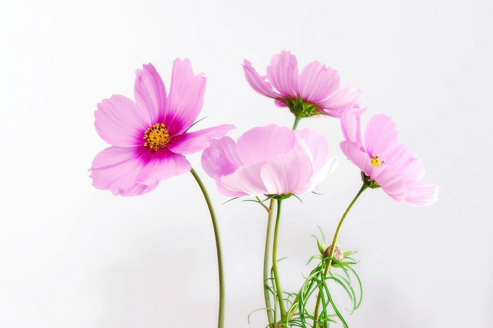 flowers happy