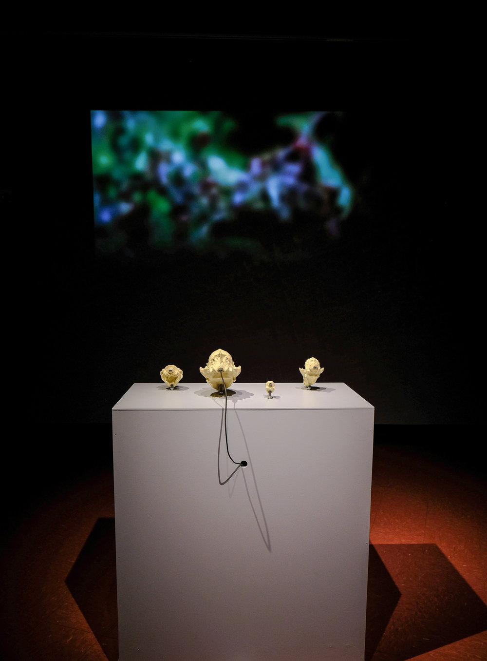 Skull Stories, 2012
