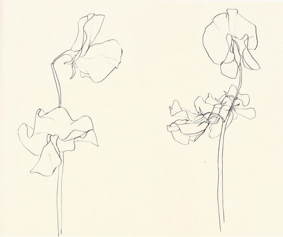Sweet Pea, Ellsworth Kelly. 1960.
