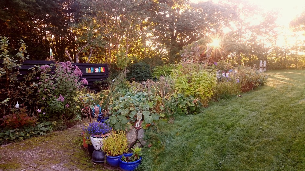 morgensol i haven.jpg