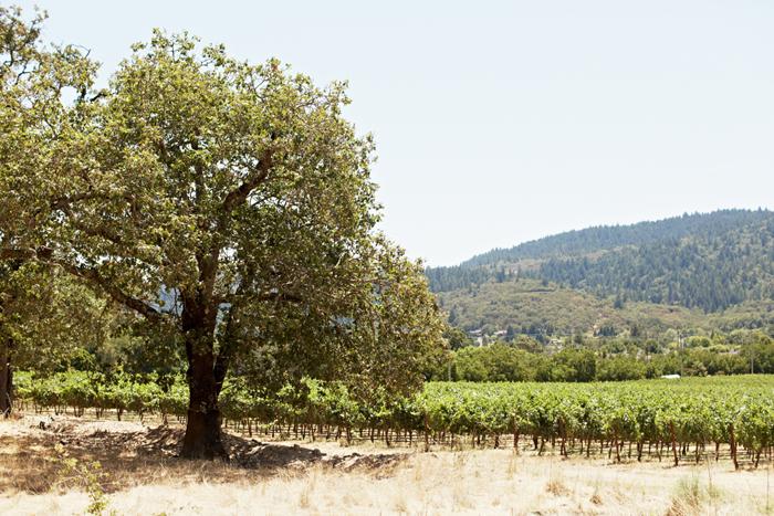 annadel vineyard