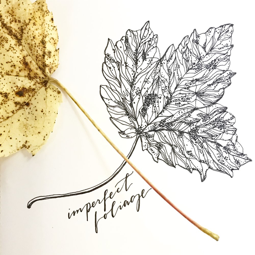Foliage Illustration | 2017