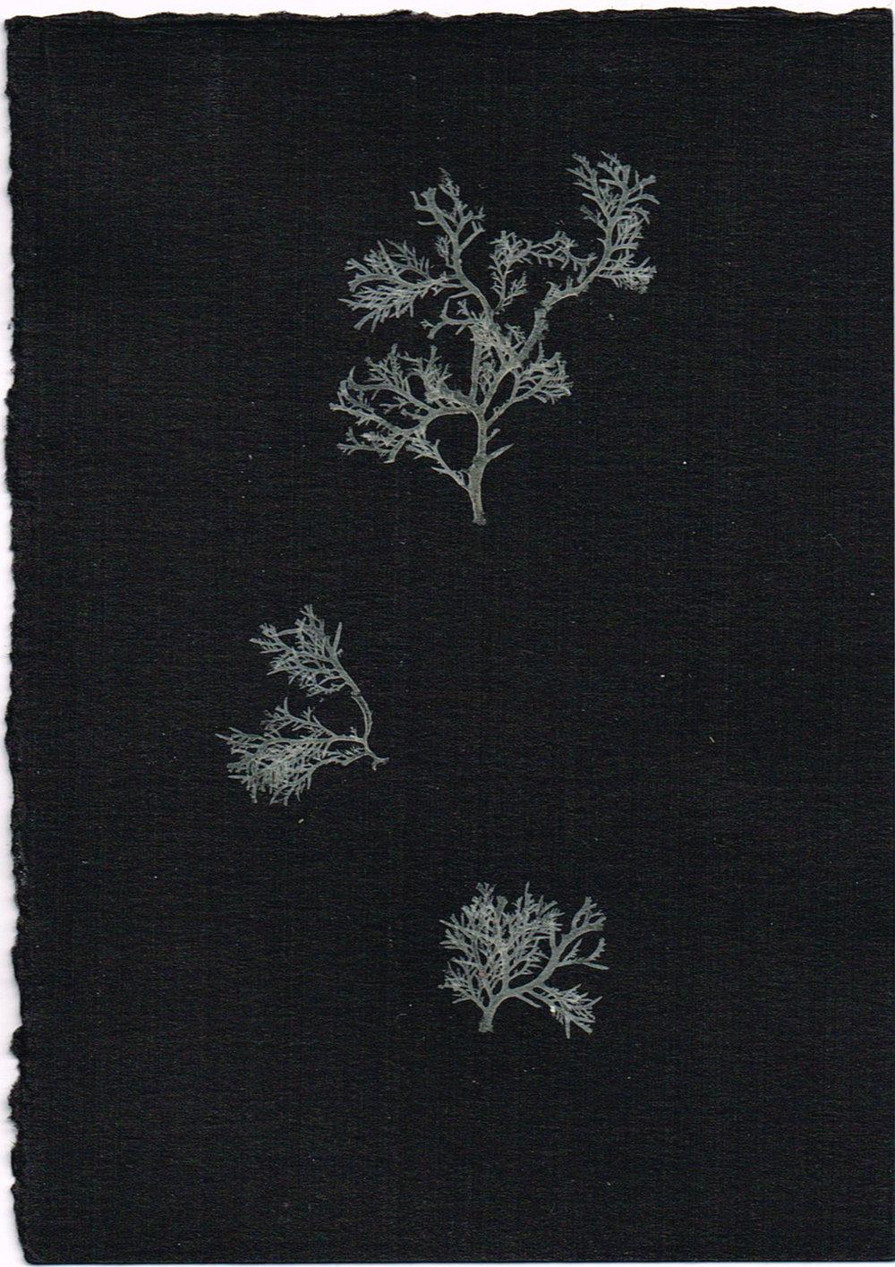 15-72.jpg