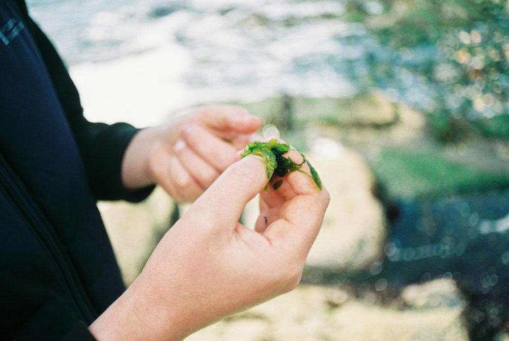 Easdale-Island-Seaweed.jpg