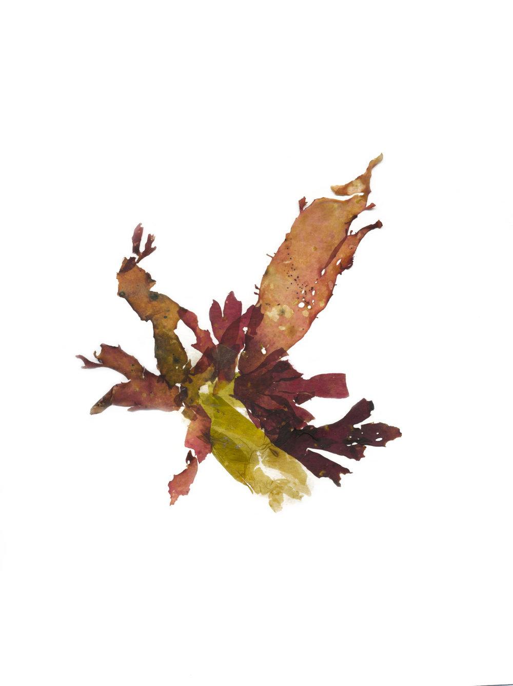 Seaweed010-Web.jpg