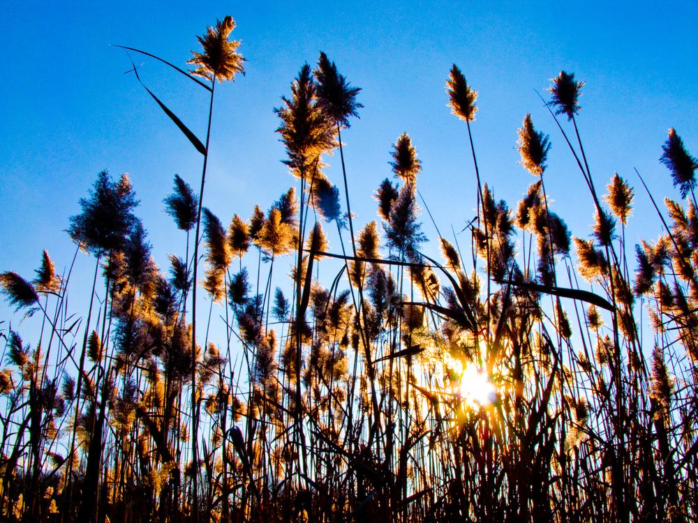 backlit grass 3