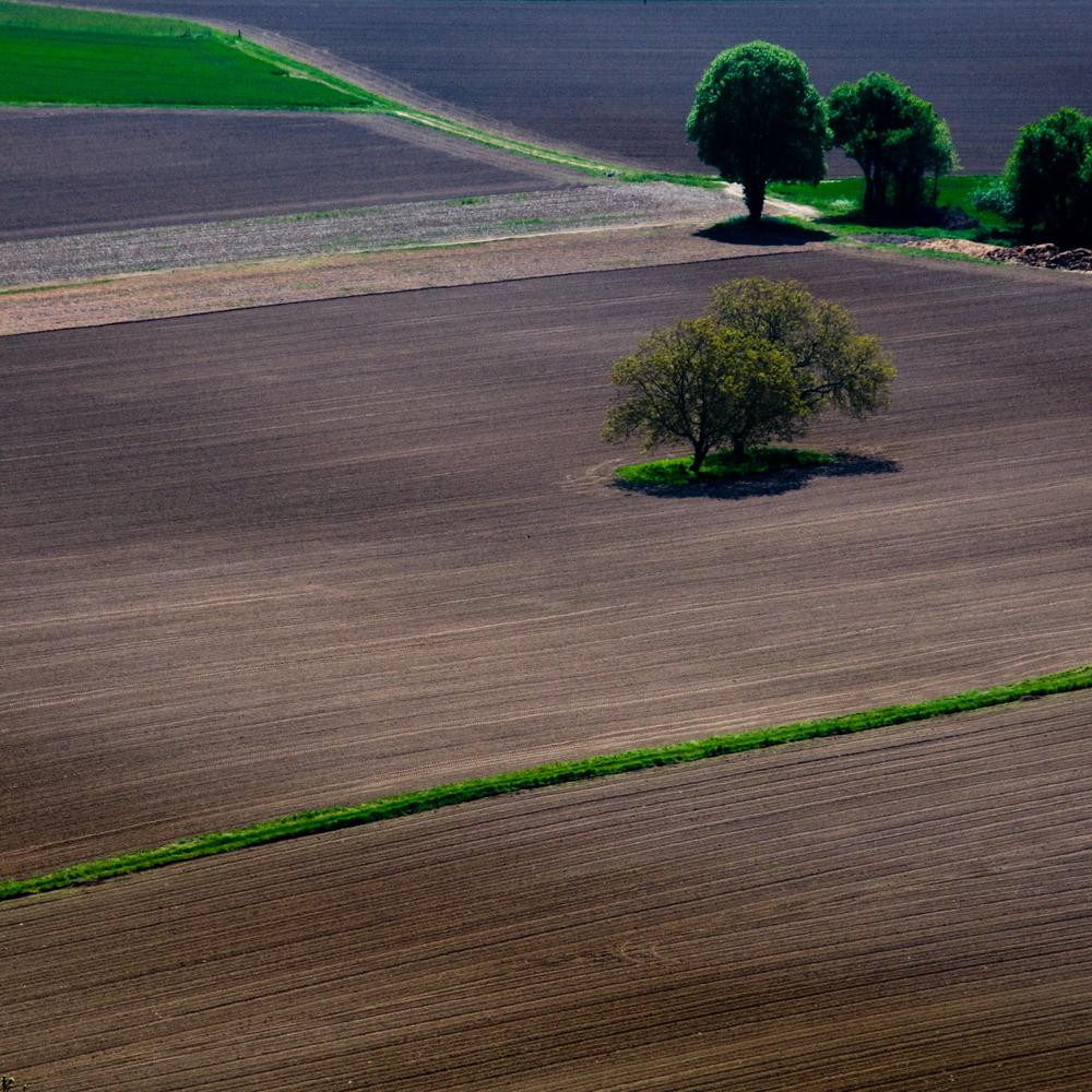 Lone Tree in farm field, Dordogne, France