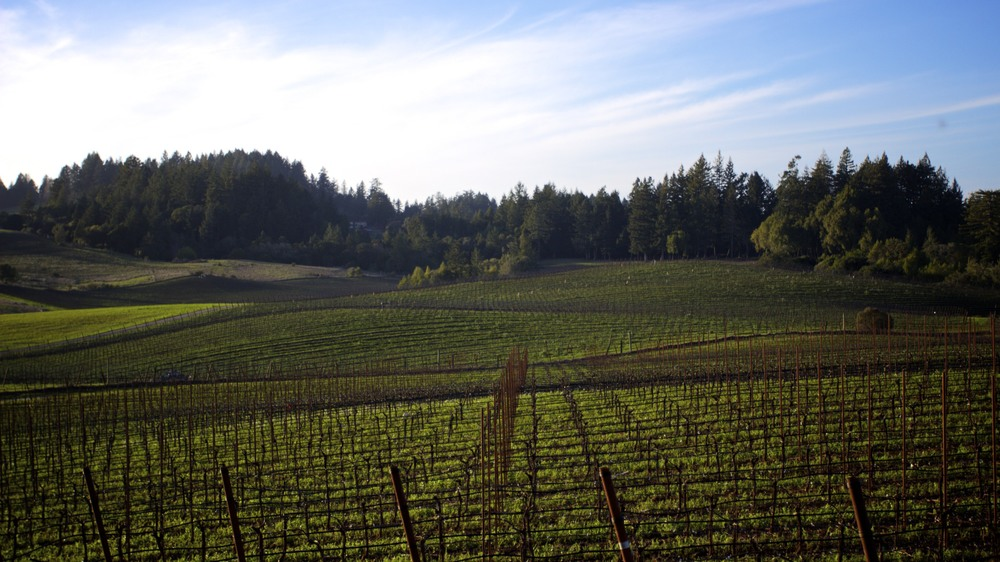 Treehouse Vineyard.jpg