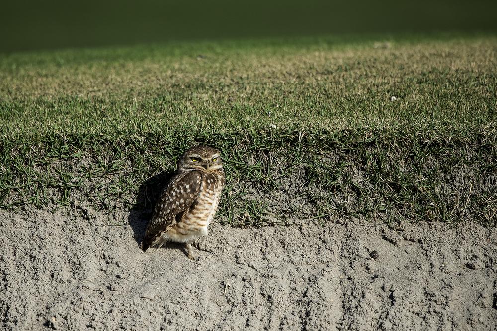14OS_golf_dag_2.JPG