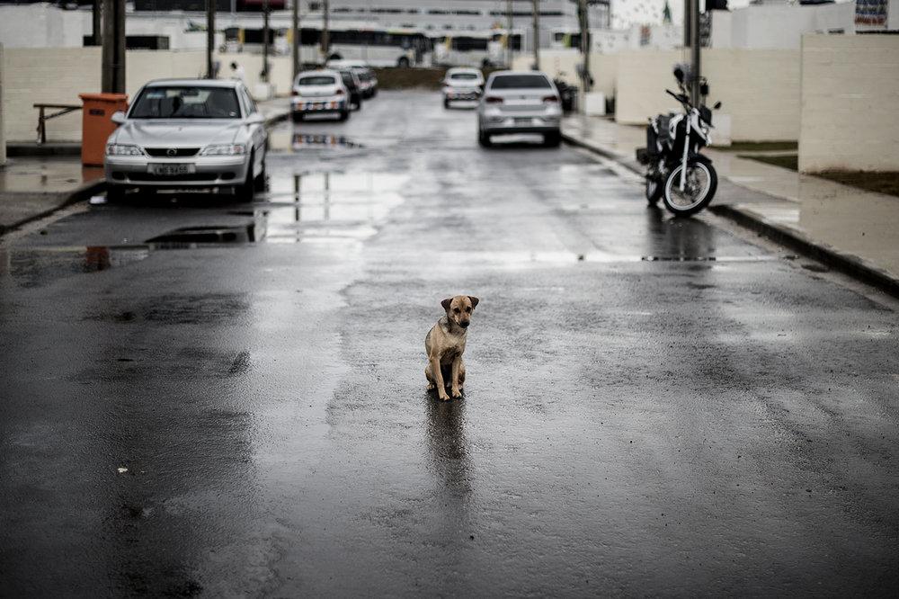 Ett tiotal hundar håller till i de nybyggda vita kubhusen. Nina hänger mitt i gatan som är spärrad för trafik.