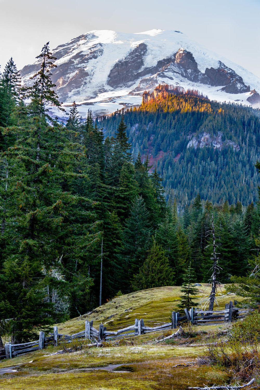 Mt. Rainier Roadtrip-7849.jpg