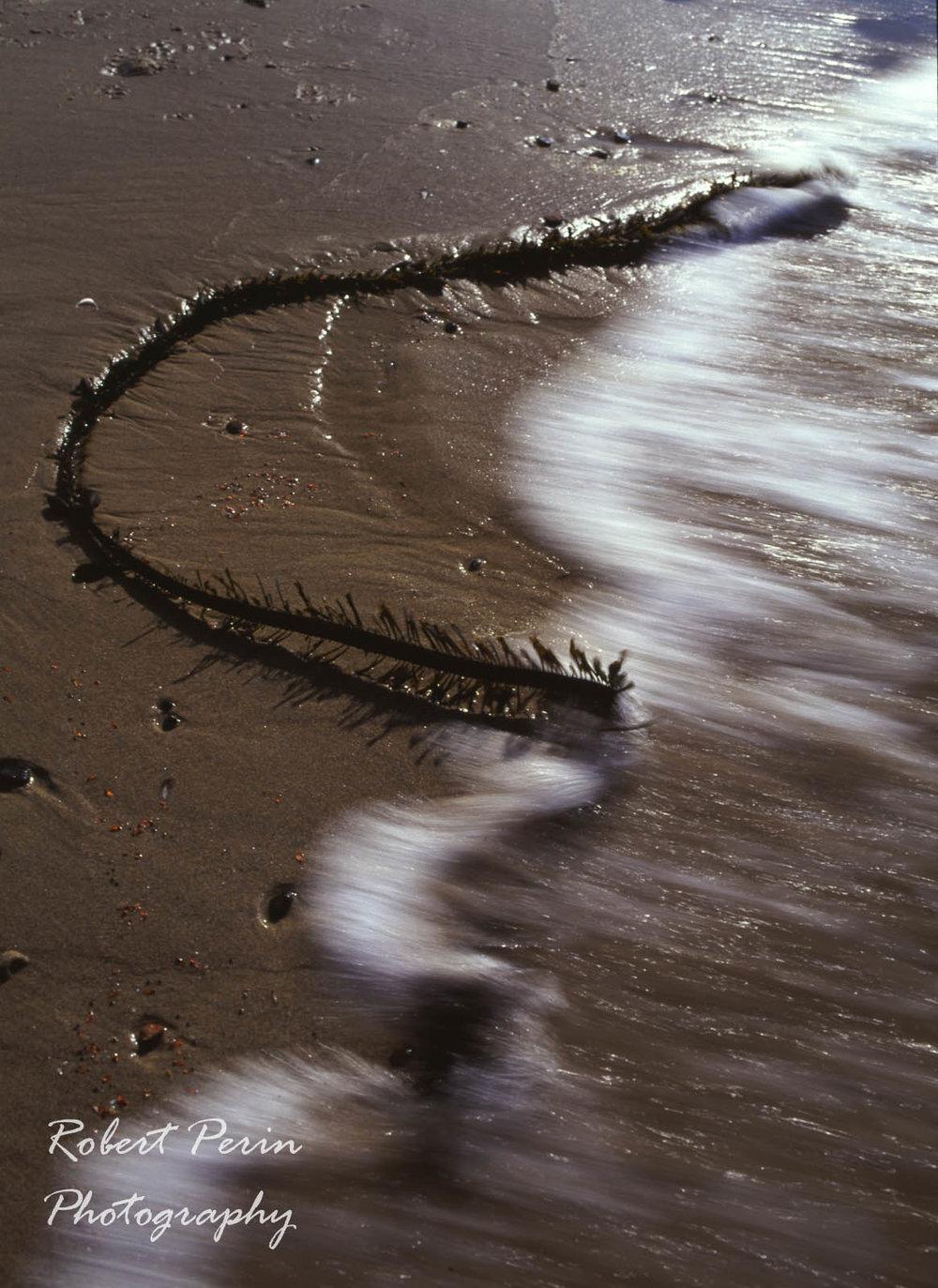 KELP ON THE BEACH 2