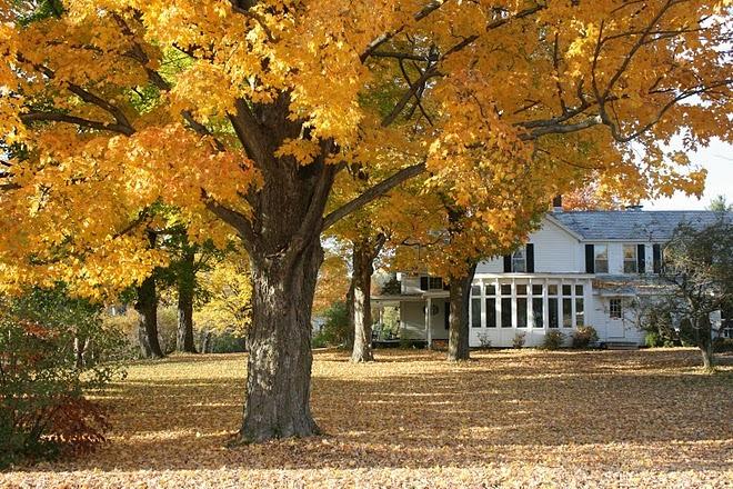 Foliage Inn at West View Farm - Dorset , Vermont