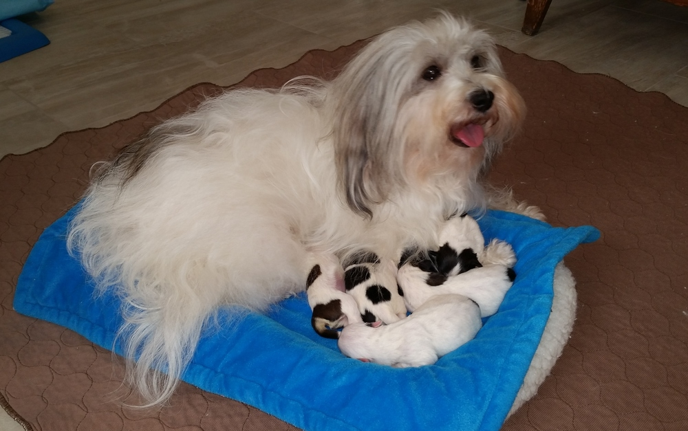 Bunny with her babies