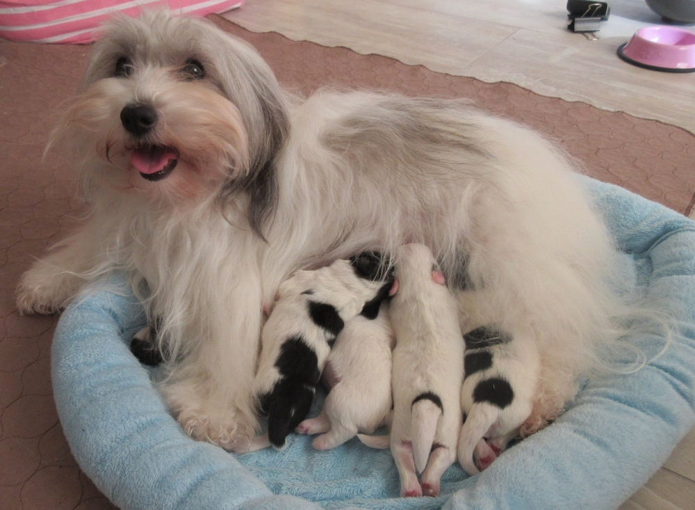 Bunny and babies
