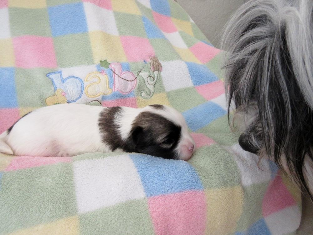 Pookie & Ryder