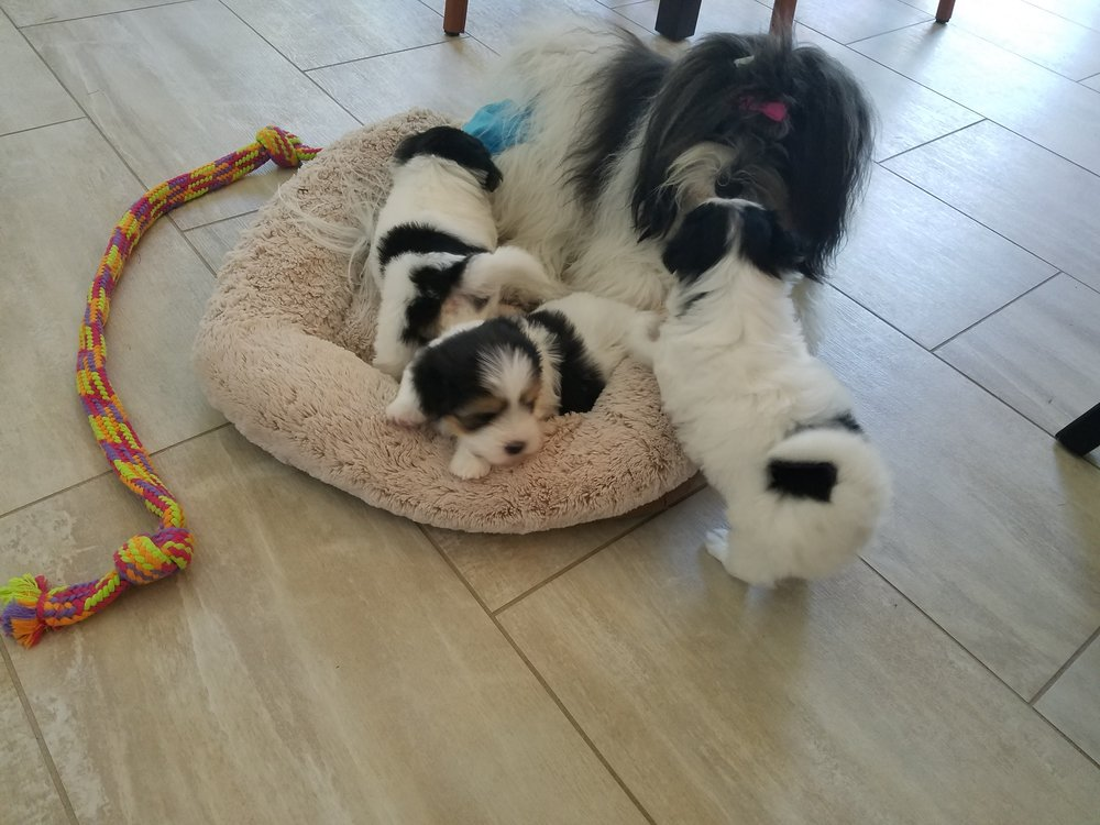 Big sister Rikki sharing her bed with her brothers.