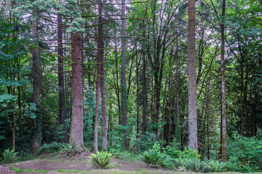 042_18700 NW Logie Trail Rd_MG_4904-HDR.jpg