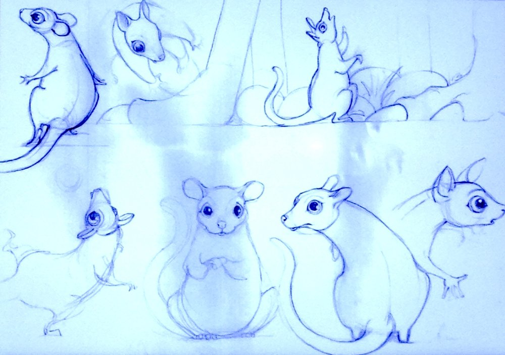 Early Possum sketches.jpg