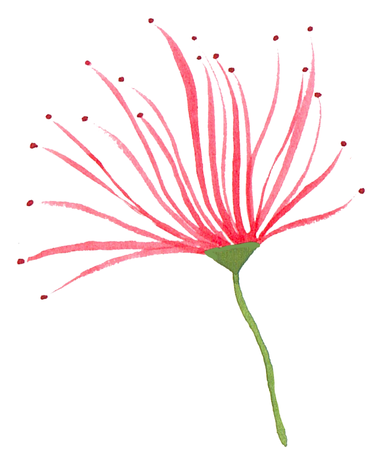 red flower 1.png