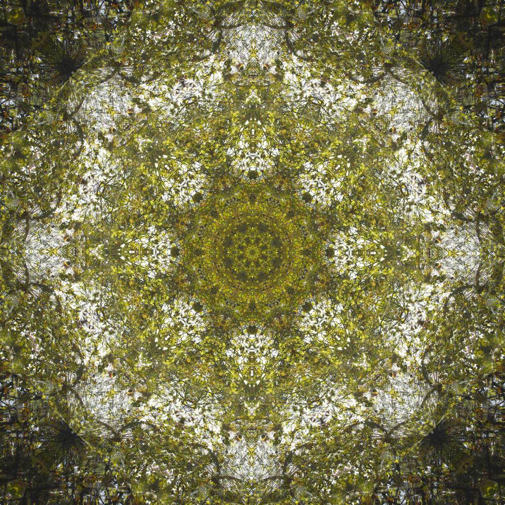plant mandala .jpg