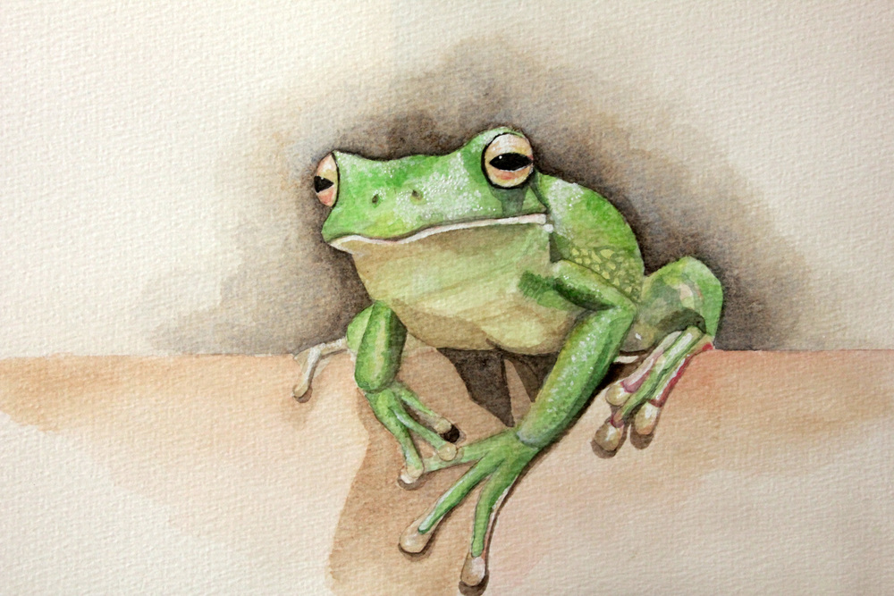 Frog Portrait II. Watercolour on paper.jpg