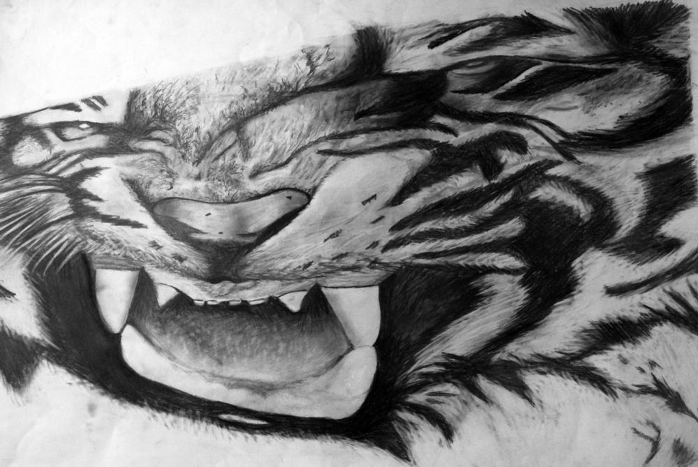 Anamorphic tiger.jpg